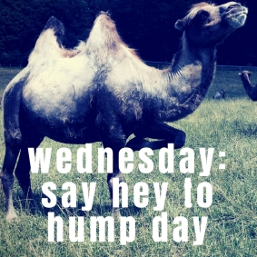 NEW PLAYLIST: Wednesday - Say Hey To Hump Day